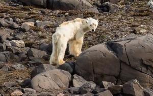 Η σοκαριστική εικόνα της πολικής αρκούδας που ίσως μαρτυρά το ζοφερό μέλλον του πλανήτη