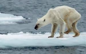 Η τραγική εικόνα της πολικής αρκούδας που ίσως μαρτυρά το σκοτεινό μέλλον του πλανήτη