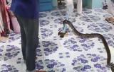Πύθωνας,pythonas