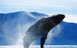 Συγκλονιστό, Φάλαινα 40, sygklonisto, falaina 40