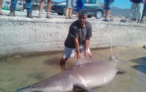 Χανιά, Καρχαρίας, Κίσσαμο, chania, karcharias, kissamo