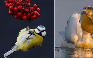 Καλύτερος Φωτογράφος Πουλιών 2017, kalyteros fotografos poulion 2017