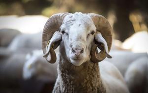 Είναι ακόμα βιώσιμη η κτηνοτροφία;