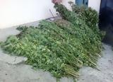Κιλκίς, Συνελήφθη 66χρονος,kilkis, synelifthi 66chronos