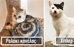 40 γάτες με το πιο ασυνήθιστο και ξεχωριστό τρίχωμα