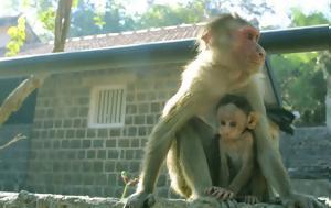 """Η """"θεωρία των άκρων"""" στα ζώα: Τα πιο μεγάλα και τα πιο μικρά κινδυνεύουν με εξαφάνιση"""