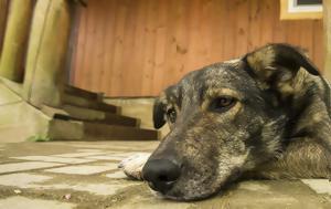 Τι μπορεί να κρύβει η κακοποίηση ζώων...