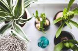 Φυτά,fyta