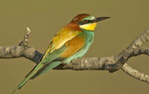 10 από τα ωραιότερα ελληνικά πουλιά στην χώρα μας