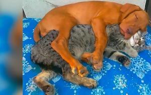 8 φορές που μία γάτα και ένας σκύλος έγιναν αχώριστοι φίλοι δείχνοντας ότι δε χρειάζεται να είσαι ίδιος με κάποιον για να γίνετε κολλητοί