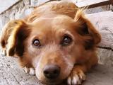 ΣΟΚ, Σκυλίτσα …, – Προσοχή Ανατριχιαστικές,sok, skylitsa …, – prosochi anatrichiastikes