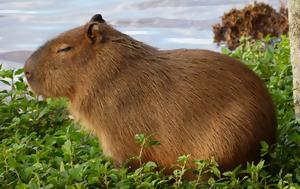 15 μεγαλύτερα στο είδος τους ζώα στη γη
