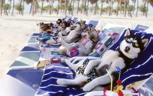Διακοπές, Δείτε, Pet Friendly Hotels, Ελλάδα, diakopes, deite, Pet Friendly Hotels, ellada
