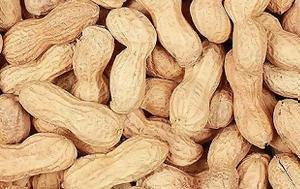 Νέα στοιχεία για την αλλεργία στα φυστίκια