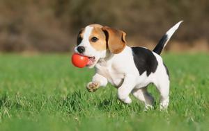 Για τους σκύλους,  κόκκινο και πράσινο χρώμα είναι το ίδιο
