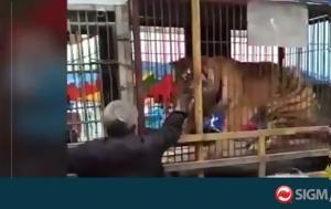 Τίγρης, ΐζει, tigris, ΐzei