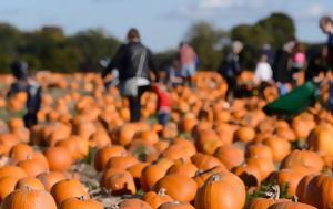 Κολοκύθες, Halloween, kolokythes, Halloween