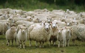 Πρόβατα, Δείτε, provata, deite
