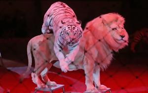 Τίγρης, VIDEO, tigris, VIDEO