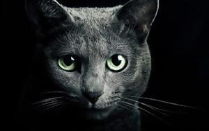 Γάτα, Προστατεύει, gata, prostatevei