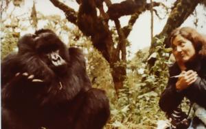 Συγκρούστηκε, Ρουάντα, Γορίλες, Ομίχλη, sygkroustike, rouanta, goriles, omichli