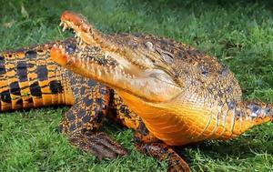 Κροκόδειλοι, -σιγά, krokodeiloi, -siga