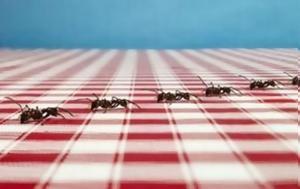 Το κόλπο για να εξαφανιστούν τα μυρμήγκια από το σπίτι