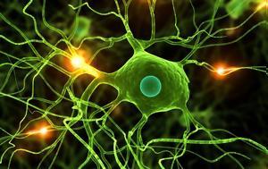 Οι κυτταρικές θεραπείες είναι οι θεραπείες του μέλλοντος