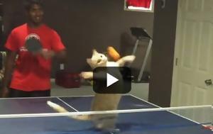 Γάτες, [video], gates, [video]