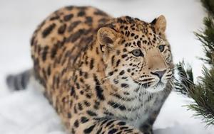 10 ζώα υπό εξαφάνιση
