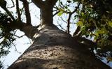 Το «μαγικό δέντρο» που προστατεύει τον πλανήτη,