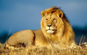 Λιοντάρι, ΦΩΤΟ, liontari, foto