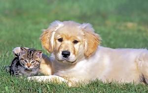 Το νέο σχέδιο νόμου για τα δεσποζόμενα και αδέσποτα ζώα συντροφιάς που τίθεται σε διαβούλευση