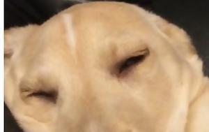 Σκύλοι, [video], skyloi, [video]