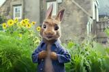O Peter Rabbit,