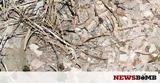 Ναύπλιο, Αγρότης, ΤΕΡΑΣ,nafplio, agrotis, teras