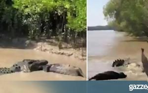 Η άνιση μάχη τεράστιου κροκόδειλου με ένα αγριογούρουνο (pic &vid)