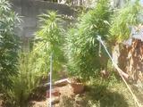 Μεσολόγγι - Καλλιεργούσε,mesolongi - kalliergouse