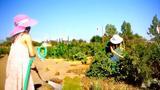 ΕΡΤ3 – ΠΡΑΣΙΝΗ ΖΩΗ, ΠΟΛΗ, ΚΗΠΟΥΡΟΣ, ΠΙΣΩ ΑΥΛΗ – Σειρά Ντοκιμαντέρ,ert3 – prasini zoi, poli, kipouros, piso avli – seira ntokimanter