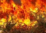 Εύβοια Φωτιά Τώρα, Έκλεισε,evvoia fotia tora, ekleise