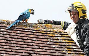 Παπαγαλίνα, papagalina