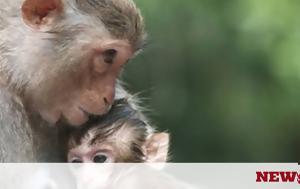 Μαϊμούδες, maimoudes