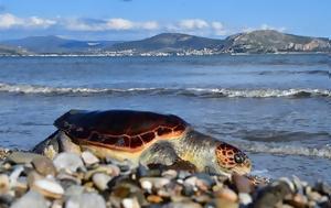 Χελώνα, Αττικής, chelona, attikis