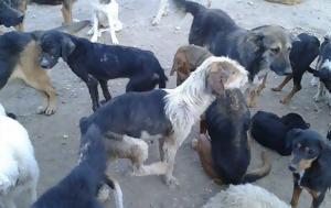 Μία, Καταφύγιο Ζώων, Γούρνες, mia, katafygio zoon, gournes