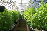 Τα οφέλη της καλλιέργειας σε θερμοκήπιο,