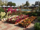 Συνεχίζεται, 411, Γιορτή, Λουλουδιών, Ηλιούπολη,synechizetai, 411, giorti, louloudion, ilioupoli