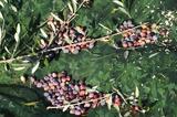 Ναυπακτία, Αγρότες, – Η,nafpaktia, agrotes, – i
