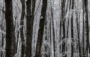 Κρυώνει, Παρασκευή, kryonei, paraskevi