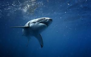 Καρχαρίας, 36χρονο, karcharias, 36chrono