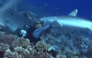 Η σοκαριστική στιγμή που ένας λευκός καρχαρίας δαγκώνει στο πρόσωπο δύτη